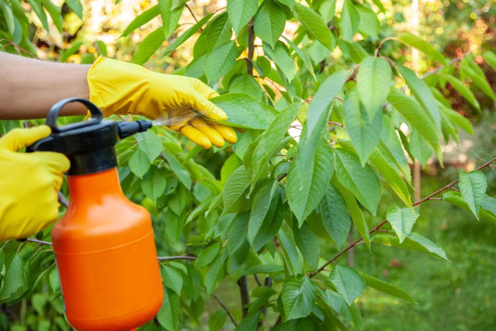 pulvérisation de vos plantes