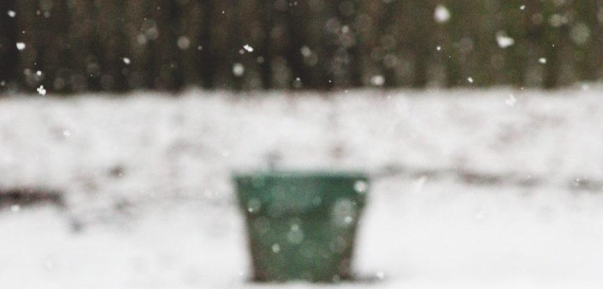 pot à plante en hiver