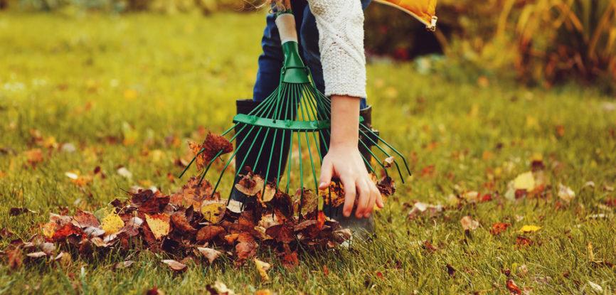 Ramassage de feuilles mortes sur pelouse