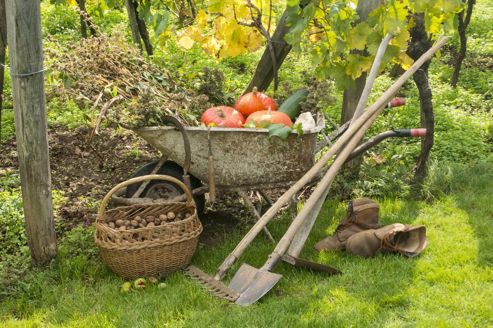 Brouette avec récolte de fruits et légumes d'automne