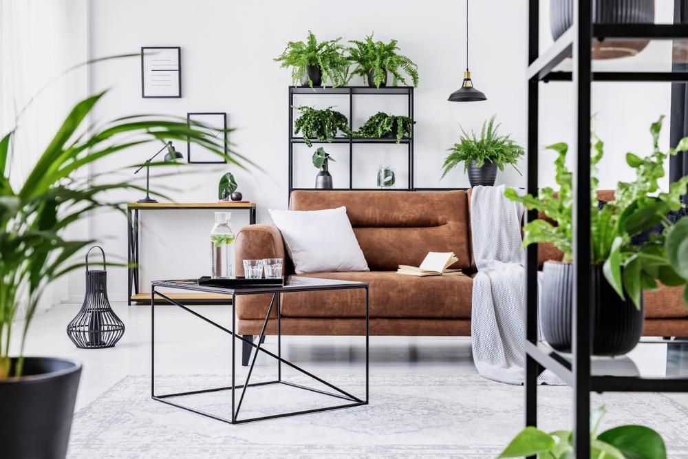 Déco de salon avec plantes vertes