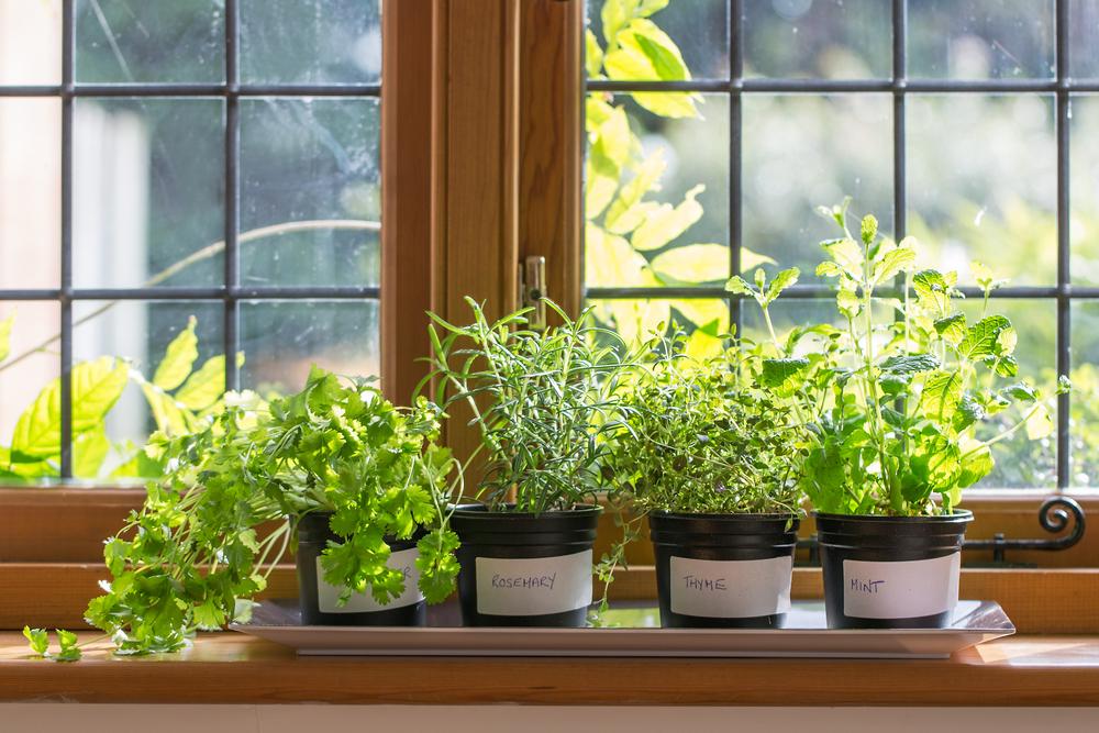 Herbes aromatiques en pots sur le bord d'une fenêtre