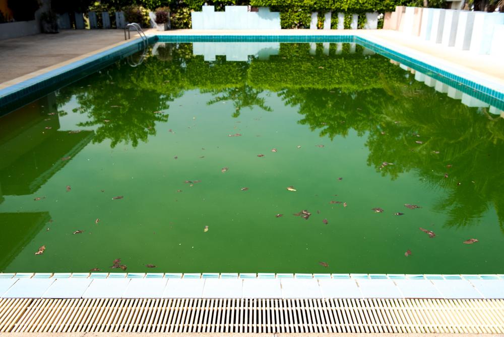 Piscine avec eau verte due à la prolifération des algues